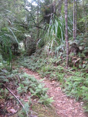 pukethi-forest2-084.JPG