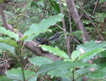 pukethi-forest2-085.JPG