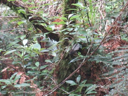 pukethi-forest2-087.JPG