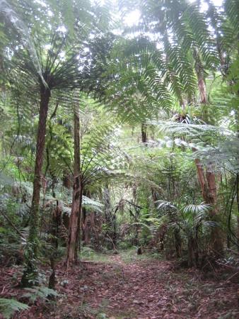 pukethi-forest2-088.JPG
