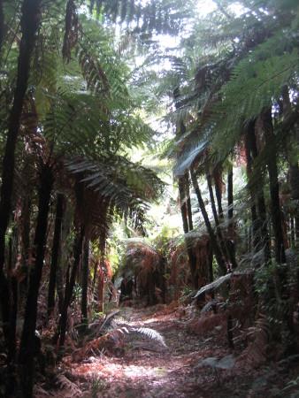 pukethi-forest2-090.JPG