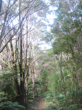 pukethi-forest2-091.JPG
