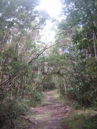 pukethi-forest2-092.JPG