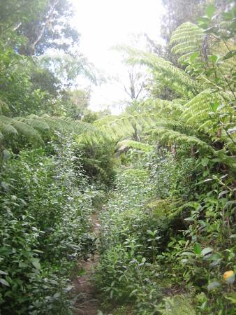 pukethi-forest2-094.JPG