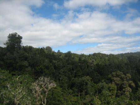 pukethi-forest2-095.JPG