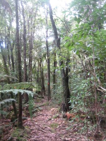 pukethi-forest2-096.JPG