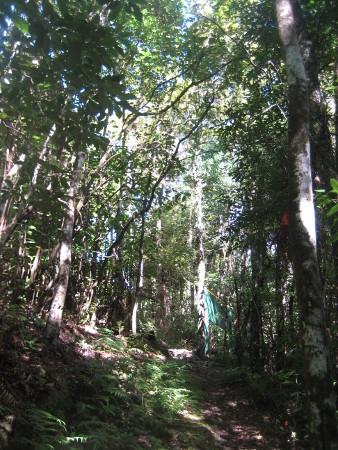 pukethi-forest2-097.JPG