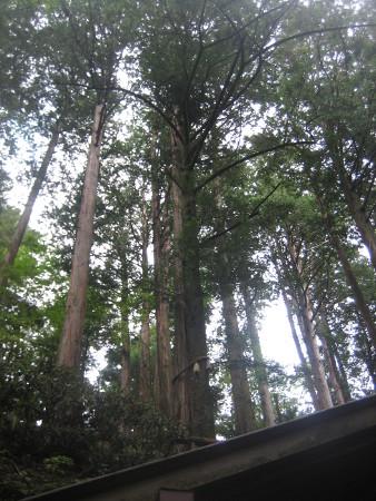 mitumine-shrine-2018-144.JPG