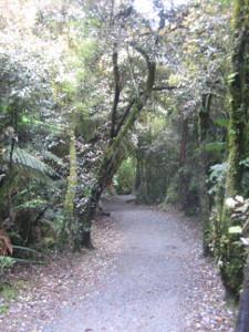 McLean-Falls-Walk-02.JPG