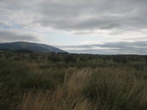 Otipua-Wetland-01.JPG