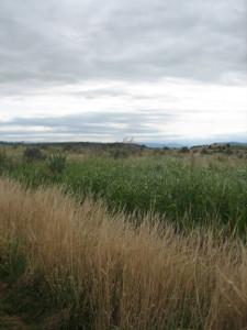 Otipua-Wetland-02.JPG