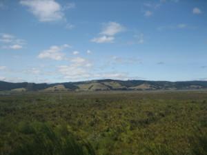 Otipua-Wetland-03.JPG