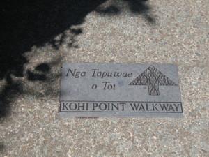 Kohi-point-05.JPG