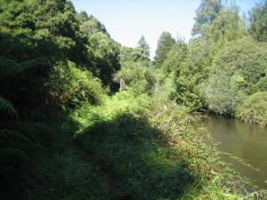 Mangaokewa-Scenic-Reserve-Riverside-Walk-02.JPG