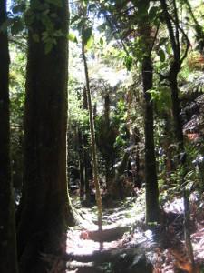 Mangaokewa-Scenic-Reserve-Riverside-Walk-03.JPG