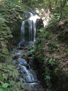Mangaokewa-Scenic-Reserve-Riverside-Walk-04.JPG
