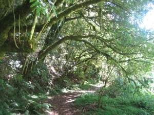 Mangaokewa-Scenic-Reserve-Riverside-Walk-06.JPG