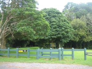 Ratapihipihi-Scenic-Reserve-01.JPG