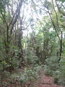 Ratapihipihi-Scenic-Reserve-02.JPG