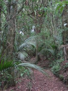 Ratapihipihi-Scenic-Reserve-03.JPG