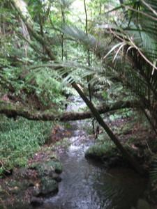 Ratapihipihi-Scenic-Reserve-04.JPG