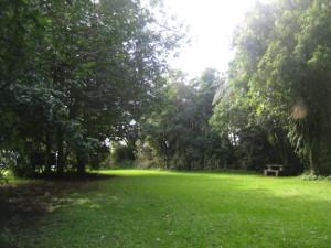Ratapihipihi-Scenic-Reserve-06.JPG