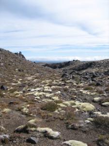 Whakapaapit-Valley-Track-05.JPG