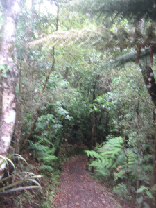 puketi-nature-trail-02.JPG