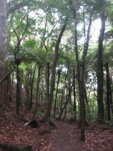 puketi-nature-trail-03.JPG