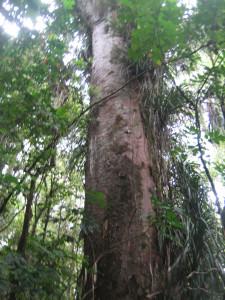 puketi-nature-trail-04.JPG