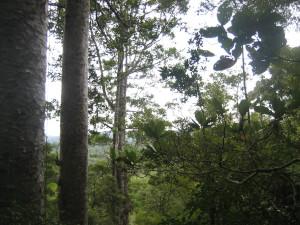 puketi-nature-trail-05.JPG