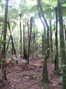 puketi-nature-trail-06.JPG