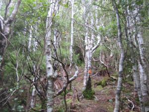 Notbett-creek-Loop-04.JPG