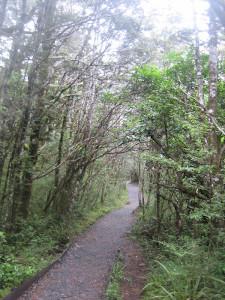 taranaki-falls-track-07.JPG