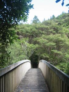 Wharekirauponga-Loop-Walk-02.JPG