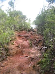 Wharekirauponga-Loop-Walk-04.JPG