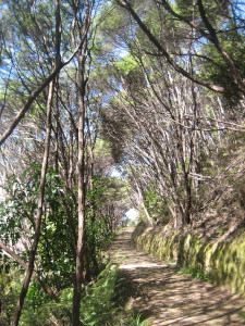coromandel-coastal-walkway-09.JPG