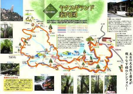 yakusugiland-01.jpg