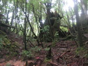 yakusugiland-04.JPG